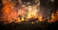Hàng trăm đám cháy mới lại bùng lên ở khu vực rừng Amazon