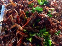 Những món côn trùng ăn vặt ở Campuchia
