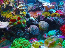 Nghiên cứu cho thấy rạn san hô bị bệnh từ chất thải nhựa