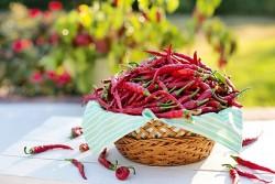 Sáu món gia vị và thảo mộc phổ biến của người Việt