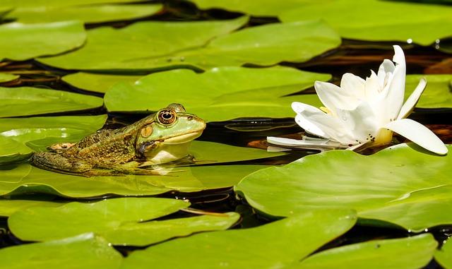 Chú ếch biết nói