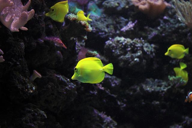 Nắng nóng đang hủy hoại các hệ sinh thái dưới lòng đại dương