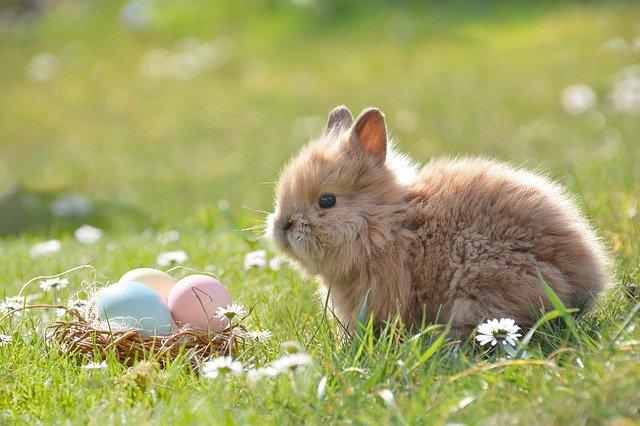 Thỏ non ăn thịt sói già: Lời dạy của người xưa người lãnh đạo ai cũng cần biết