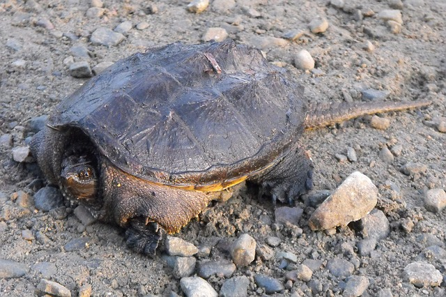 In Cape Verde, Project Biodiversity is on a mission to save baby turtles from human impact